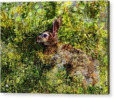 Hare In Hiding Acrylic Print by J Larry Walker