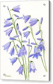 Harebells Acrylic Print by Sharon Freeman