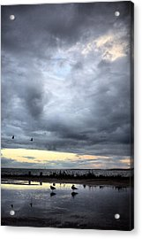 Harkers Island Acrylic Print by JC Findley