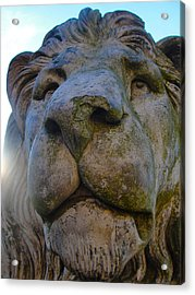 Harlaxton Lions Acrylic Print by Tiffany Erdman