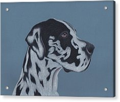 Harlequin Great Dane Acrylic Print by Sesh Artwork
