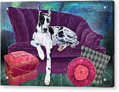 Harlequin Haven Acrylic Print