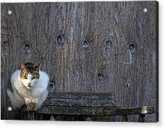 Acrylic Print featuring the photograph Harlequin Rustic by Chriss Pagani