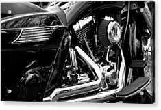 Harley Acrylic Print by Michelle Calkins