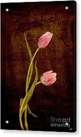 Harmony  Acrylic Print by Alana Ranney
