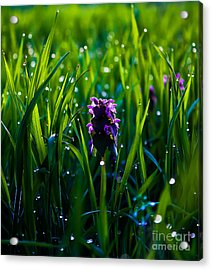 Harmony Of Feeling  -additional View Acrylic Print by Everett Houser
