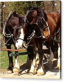Harness Partners Acrylic Print