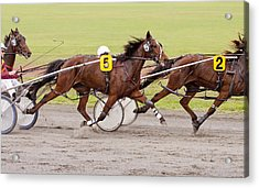 Harness Racing Acrylic Print by Michelle Wrighton