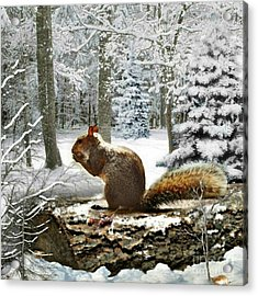 Harry In Winter 2 Acrylic Print by Morag Bates