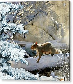 Harry In Winter Acrylic Print by Morag Bates