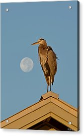 Acrylic Print featuring the photograph Harry The Heron Ponders A Trip To The Full Moon by Jeff at JSJ Photography
