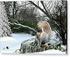 Harry The Squirrel Acrylic Print by Morag Bates