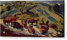 Hart Ranch Buffalo Acrylic Print