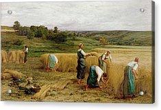 Harvest Acrylic Print by Leon Augustin Lhermitte
