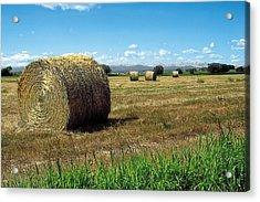 Harvest 3 Acrylic Print