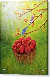 Harvest Apples And Bluebirds Acrylic Print