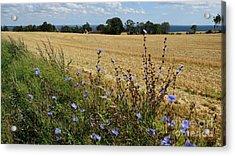 Harvest In Denmark Acrylic Print