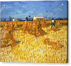 Harvest In Provence, June 1888 Acrylic Print by Vincent van Gogh