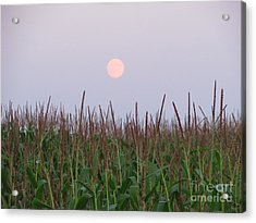 Harvest Moon Acrylic Print by Michael Krek