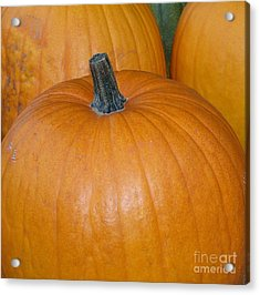 Acrylic Print featuring the photograph Harvest Pumpkins by Chalet Roome-Rigdon