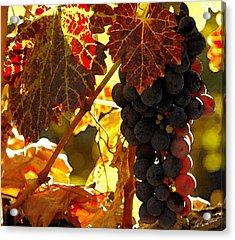 Harvest Time Acrylic Print by Cole Black