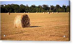 Acrylic Print featuring the photograph Harvest Time by Gordon Elwell