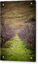 Harvested Vines Acrylic Print by Mike Lee