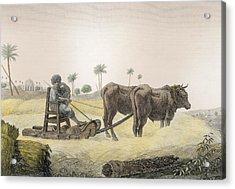 Harvesting Corn, From Volume II Arts Acrylic Print