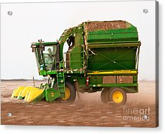 Acrylic Print featuring the photograph Harvesting Cotton by Mae Wertz