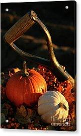 Harvesting For Thanksgiving Acrylic Print by Sandra Cunningham