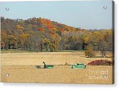 Harvesting Iowa Corn  Acrylic Print by Yumi Johnson