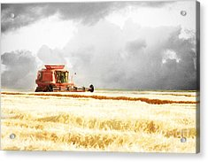 Harvesting The Grain Acrylic Print