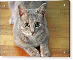 Hattie The Kitty Acrylic Print