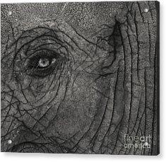 Haunting Eye Acrylic Print