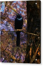 Acrylic Print featuring the digital art Haunting Grackle by J Larry Walker