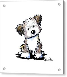 Havanese Puppy Acrylic Print