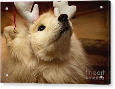 Have I Been A Good Doggie? Acrylic Print by Lois Bryan