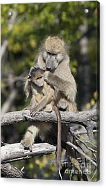 Have You Cleaned Behind Your Ears Acrylic Print