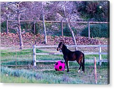 Having A Ball Acrylic Print