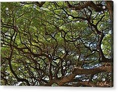 Hawaiian Banyan Tree Acrylic Print by Sam Amato