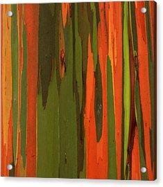 Hawaiian Eucalyptus Acrylic Print by James Eddy