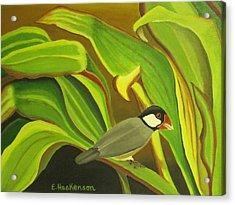 Hawaiian Finch On Tea Leaves Acrylic Print by Elaine Haakenson