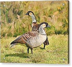 Hawaiian Goose Couple Acrylic Print
