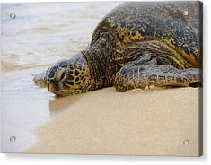 Hawaiian Green Sea Turtle 3 Acrylic Print by Brian Harig