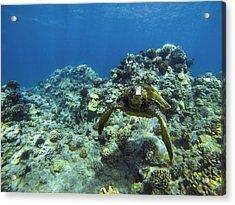 Hawaiian Green Sea Turtle Acrylic Print by Brad Scott