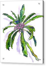Hawaiian Haha Plant Cyanea Stictophylla Acrylic Print