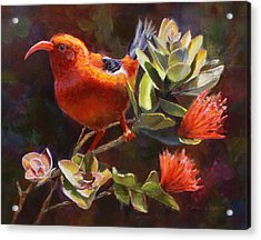 Hawaiian IIwi Bird And Ohia Lehua Flower Acrylic Print