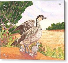Hawaiian Nene Goose And Goslings Acrylic Print by Tammy Yee