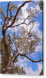 Acrylic Print featuring the photograph Hawaiian Sky by Jim Thompson