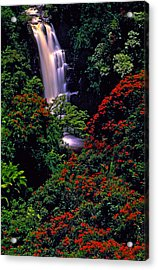 Hawaiian Waterfall With Tulip Trees Acrylic Print